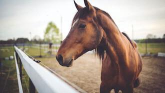 Alles voor je paard